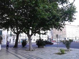 O que sobrou da praça original, que tinha árvores grandes como estes dois plátanos que sobraram. Repare-se também na típica Calçada Portuguesa, eliminada na secção Sul da praça, onde fizeram as novas entradas para o metro.